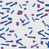 bacteria blue red on grey