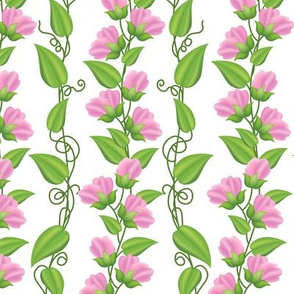 Rambling  Sweetpea Vines Pink