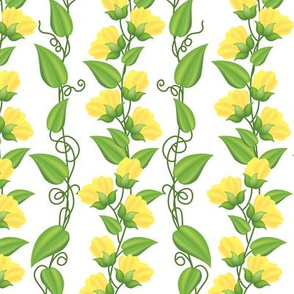 Rambling  Sweetpea Vines Yellow
