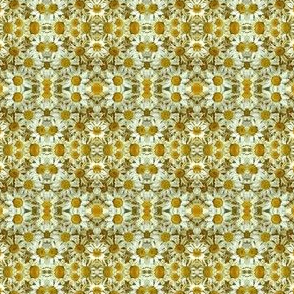 Dried daisies