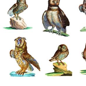 Ornithologica Owl 1778