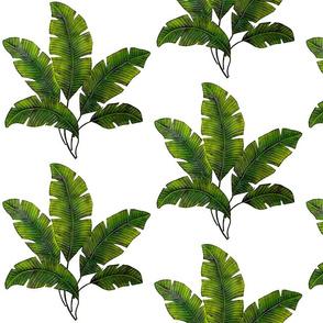 Banana Leaf Crest
