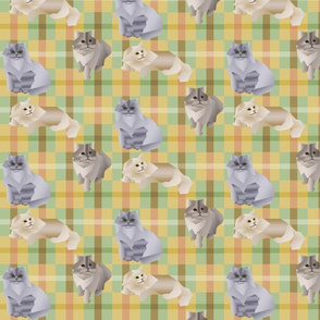 square_cats