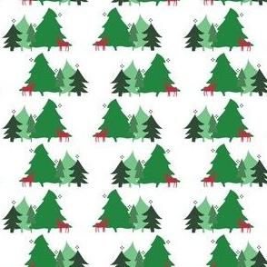 Fir forest 1