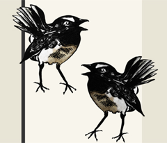 Willy wagtail stripe