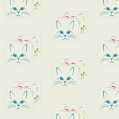 cubey cats
