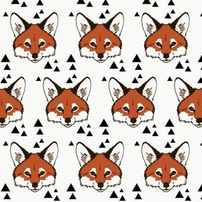 Foxes on white