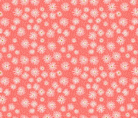 daisies - coral