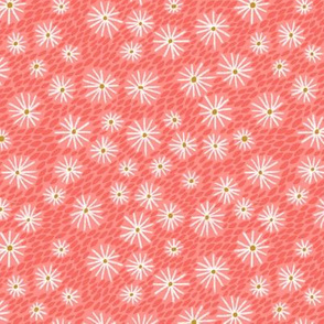 daisies - coral