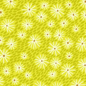 daisies - citrus