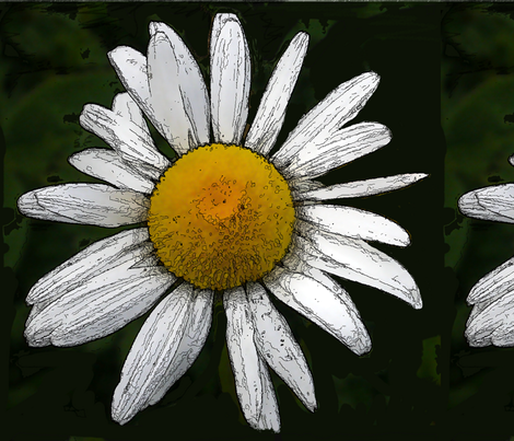 Daisy   big
