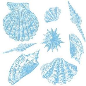 Coquillage in aqua