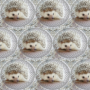 hedgehog ...
