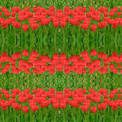 Red Tulip Carpet