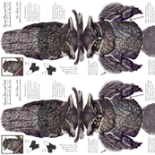 Great Horned Owl Art Bird