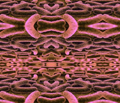 Mycobacterium tuberculosis - pink