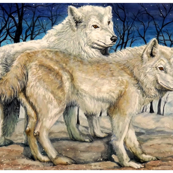 White Wolves, Watercolor Art Fabric by Kara Skye