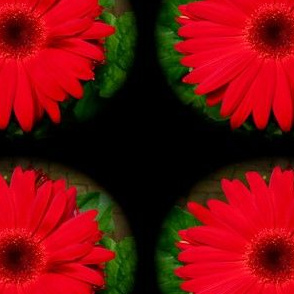 red gerber
