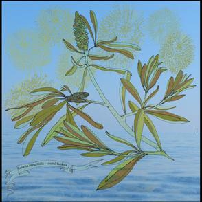 coastal banksia fireworks