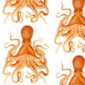 Custom Octopus for Saunders