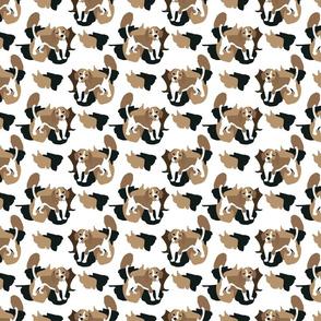 Beagle Camouflage