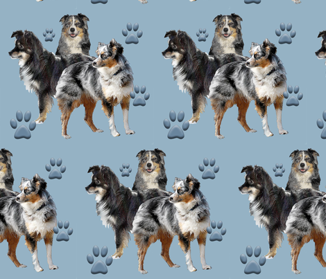 Australian Shepherd family group