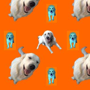 Patrick_puppy_orange
