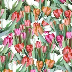 Garden of Tulips - Pink, Orange, Red