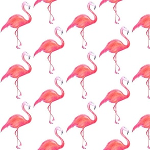 Flamingo Pop!