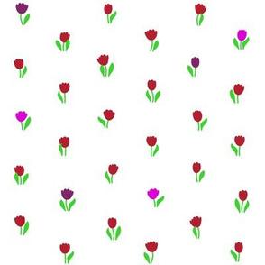Tulip Harmony 2015