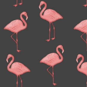 Bimini Bay Flamingos on Charcoal