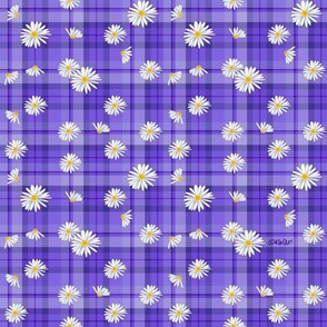 Purple Daisy Craze (SMALL)