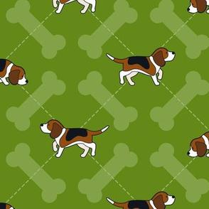 Beagle Puppy Argyle