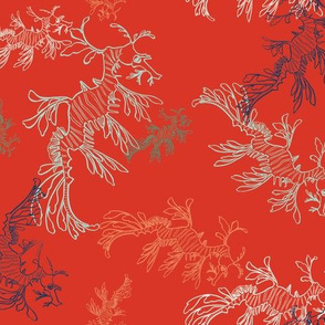 leafy sea dragons in red