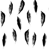 feathers black on white