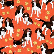 Pantone Puppies Tangerien