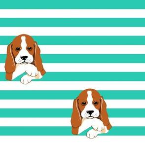 Fiaba Beagle