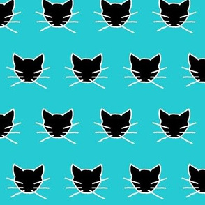 Black cat on turquoise