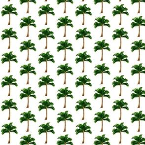 Medium Palm Trees