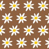 Springdaisy