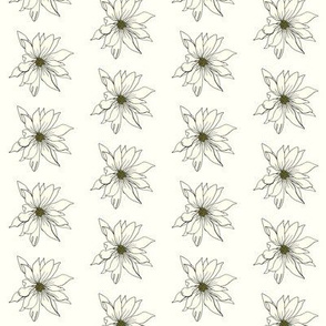 White Daisy Drawing