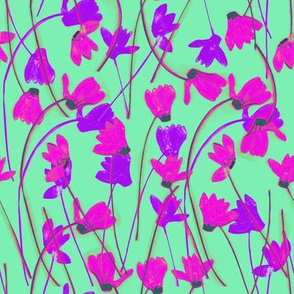 Flowering Cyclamen #6