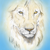 Lion Portrait, Tinted 5