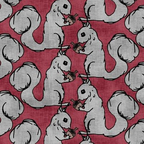 Gray Squirrels on Red