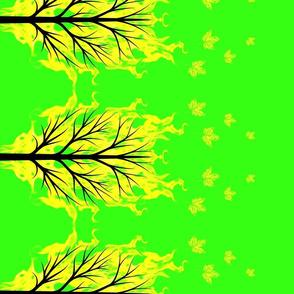 flaming maple tree