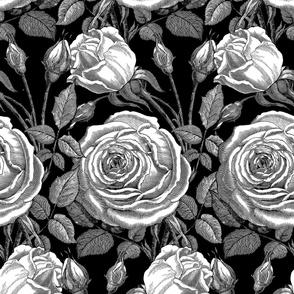 Perle des Jardins ~ Black and White ~ Noir