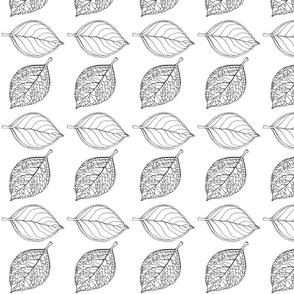 Hydrangea Leaves White