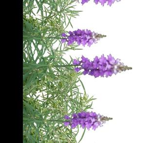 Lavender_repeat1_-_blk2
