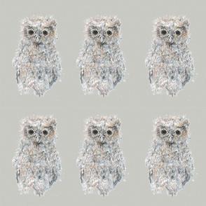 baby_owl_no_2