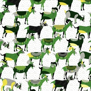 Fancy Goats